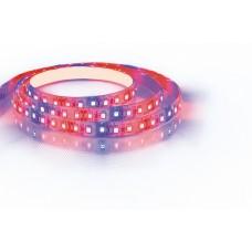 Шнур световой [5 м] Feron Saffit LS670 29518